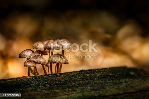 Mushroom familyin magic light