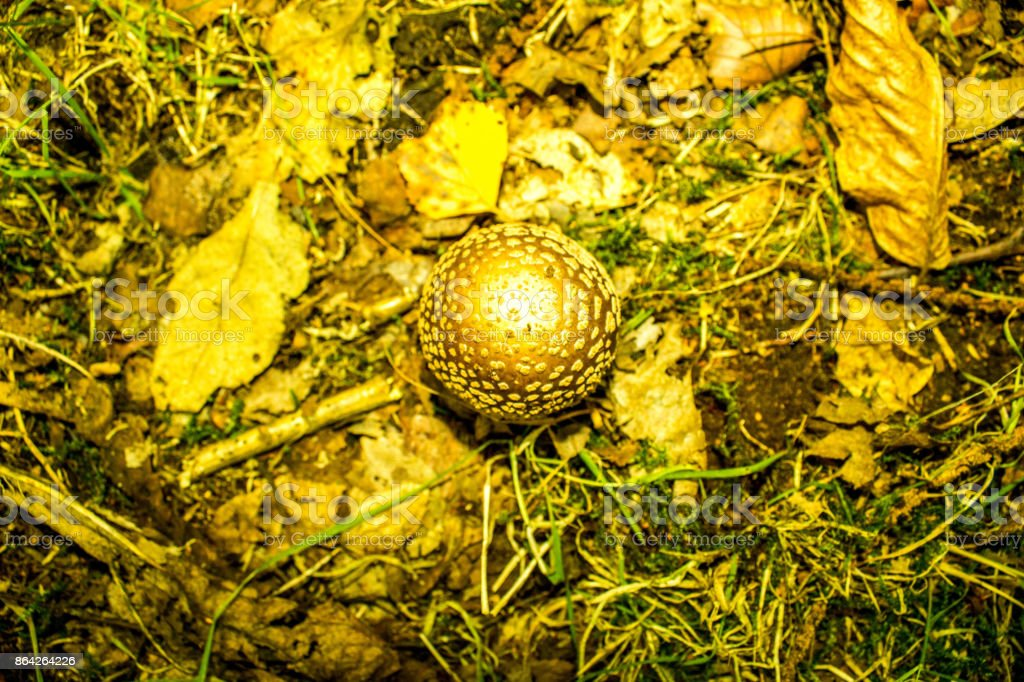 Mushroom from Above royalty-free stock photo