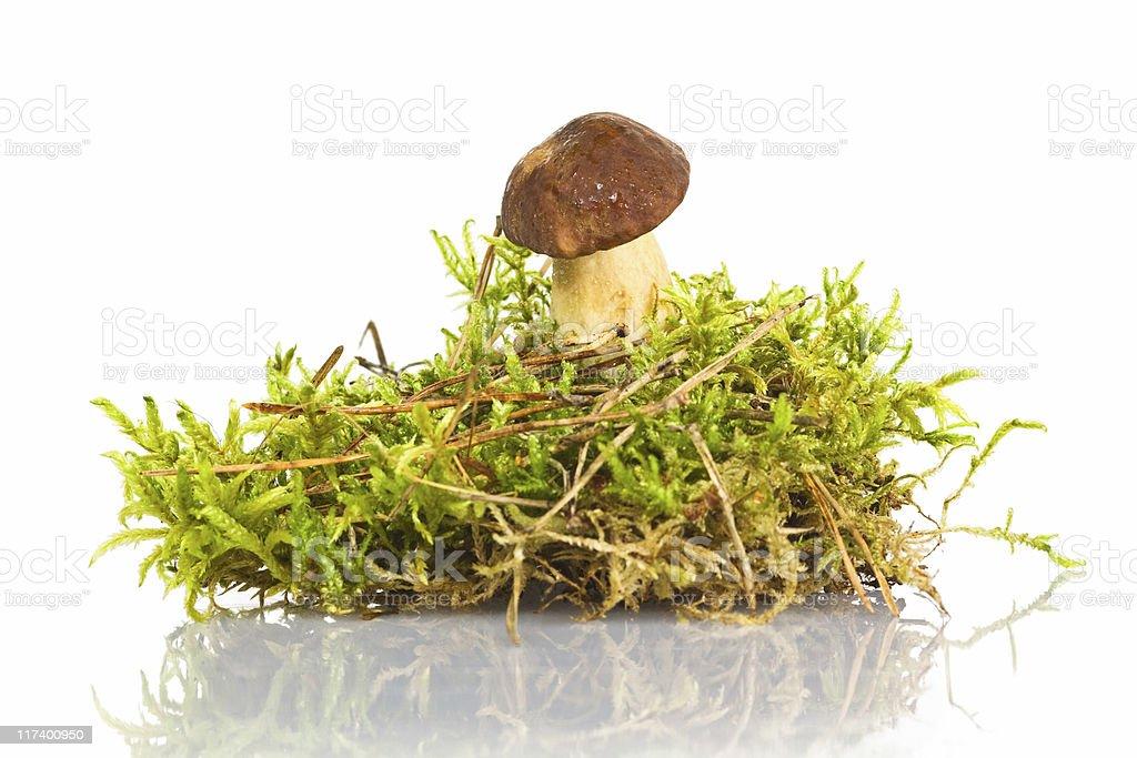 Mushroom II royalty-free stock photo