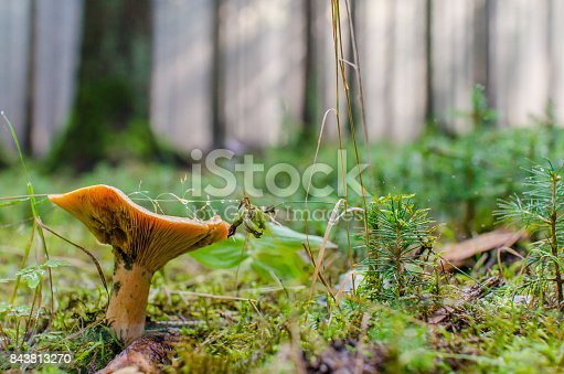 istock Mushroom in a forest 843813270