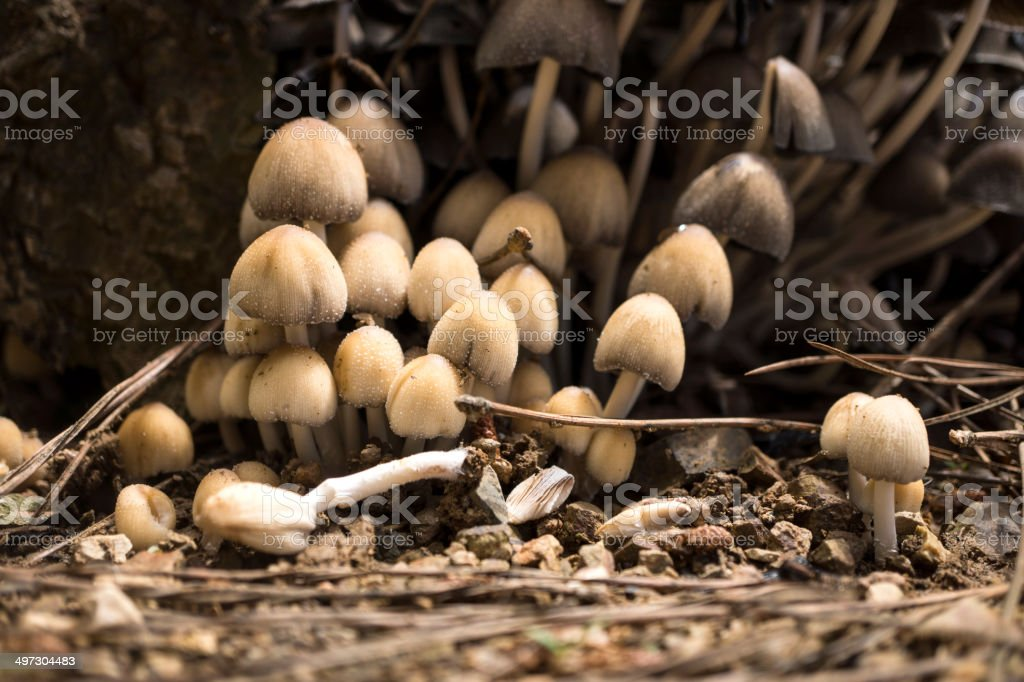 Mushroom in a garden royalty-free stock photo