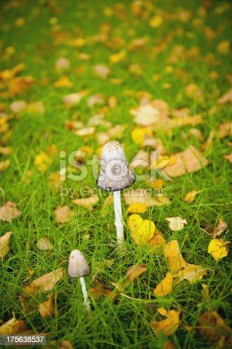 Mushroom in a meadow.