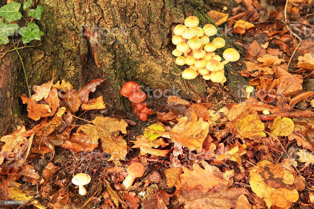 Mushroom in Autumn Forest stock photo