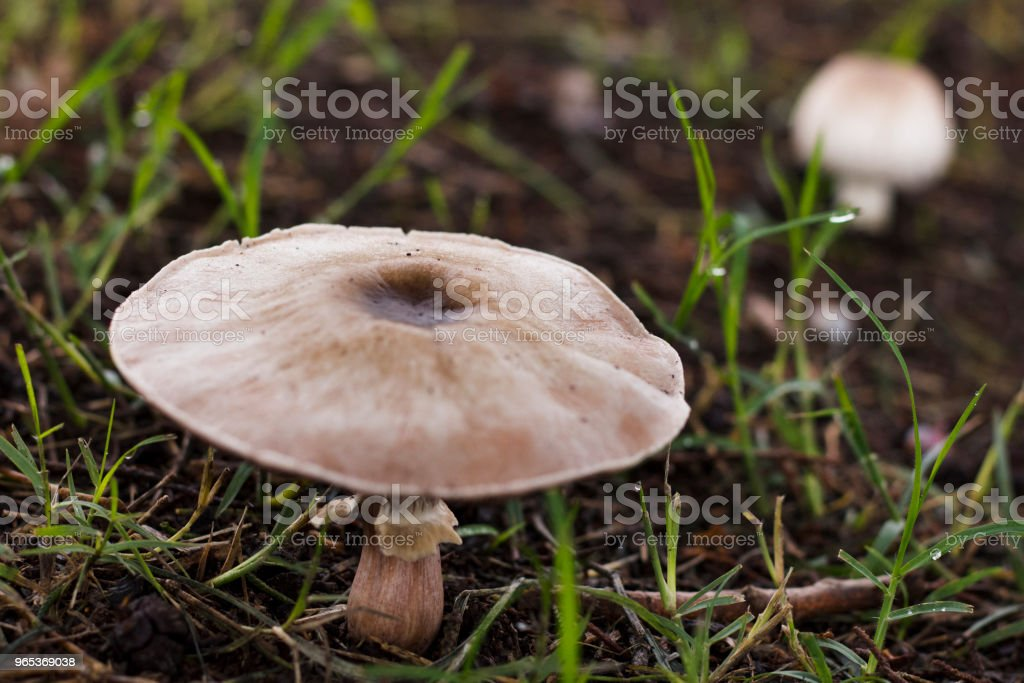 mushroom in foreground light color soft texture royalty-free stock photo