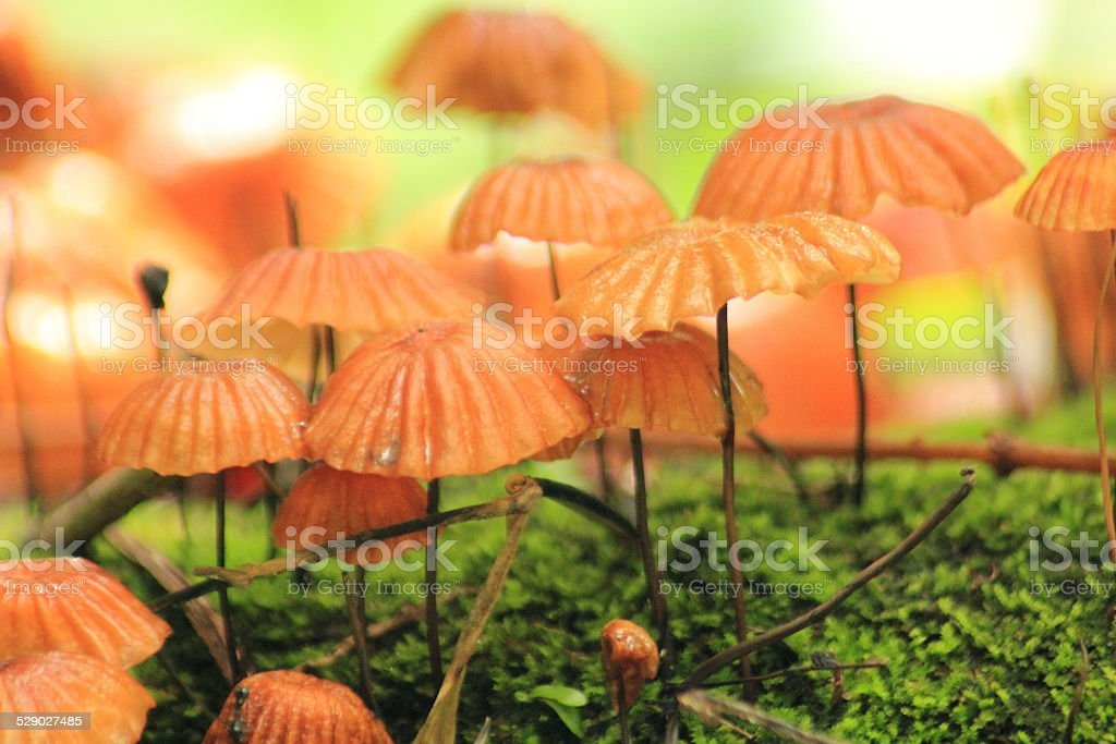 Mushroom in Forest stock photo