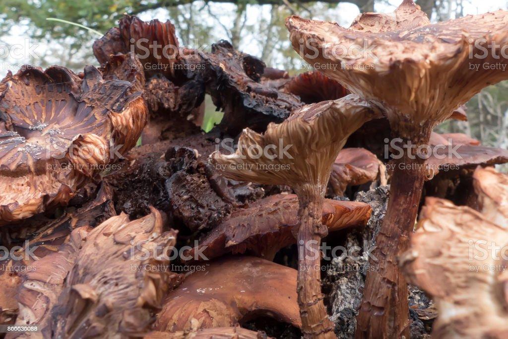 Pilze im Wald – Foto