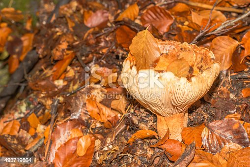 istock mushroom in the forest mountain in France 493719864