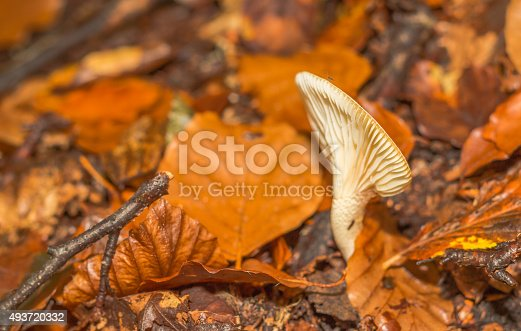 istock mushroom in the forest mountain in France 493720332