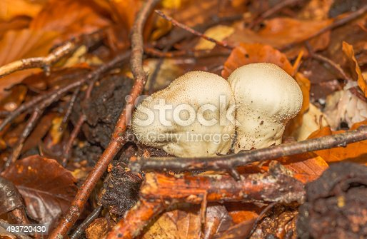istock mushroom in the forest mountain in France 493720430