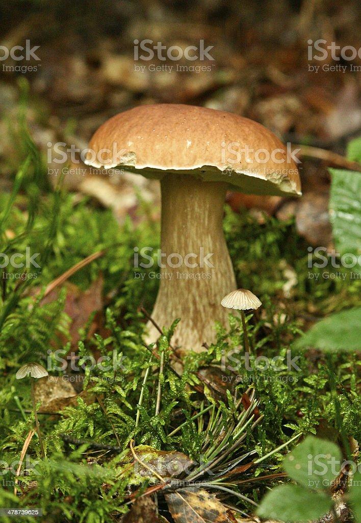 Mushroom in the grass stock photo
