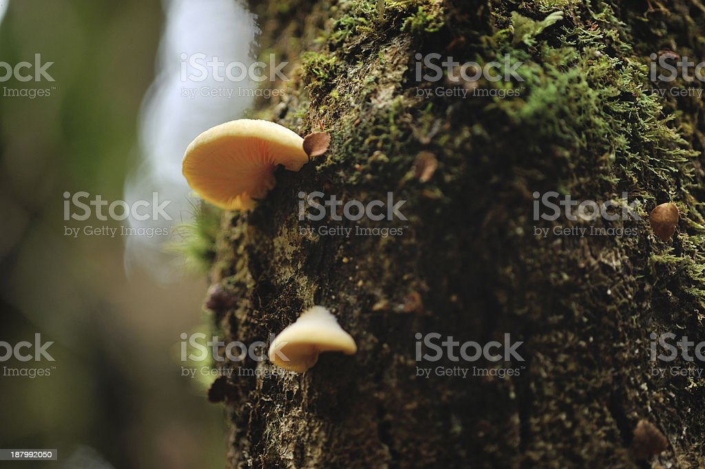 Mushroom in the Woods royalty-free stock photo