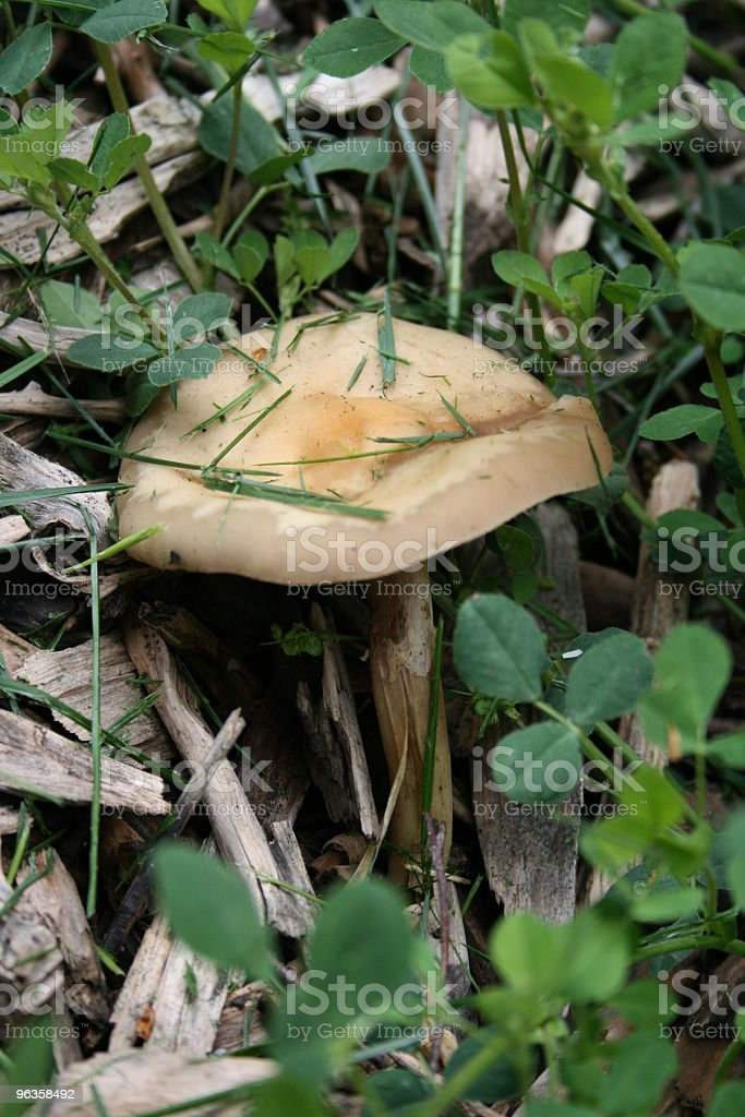 mushroom in twigs and clover royalty-free stock photo