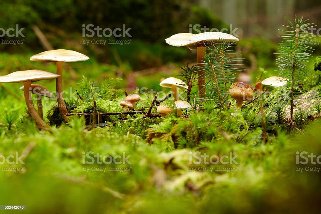 Mushroom on a mossy forest floor stock photo