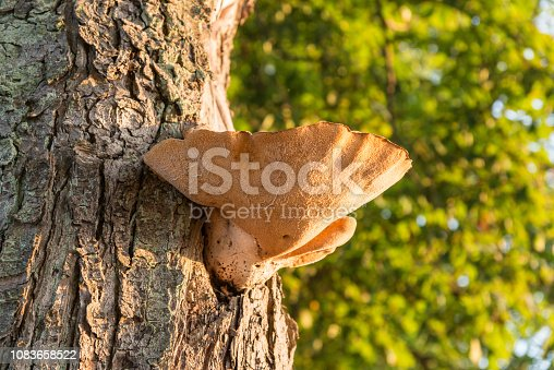 Mushroom on a tree in some meters high in summer