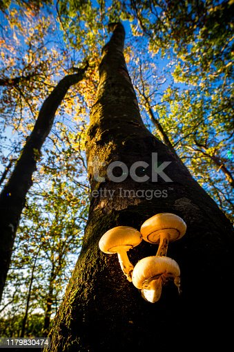 Mushroom photographed with a wide angle macro lens from beneath, low perspective