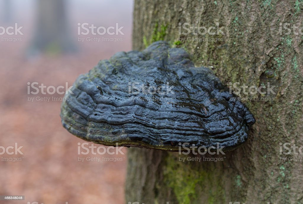 Mushroom on a tree trunk in the forest royalty-free stock photo