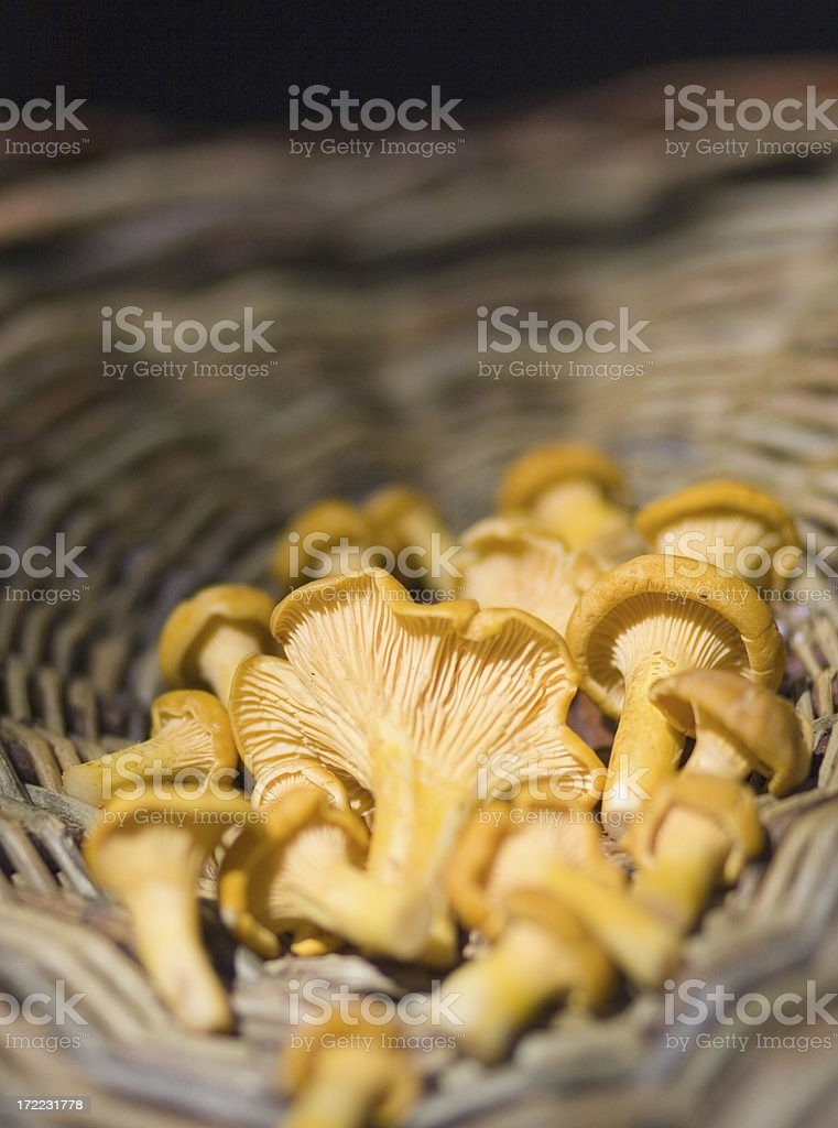 mushroom picking royalty-free stock photo
