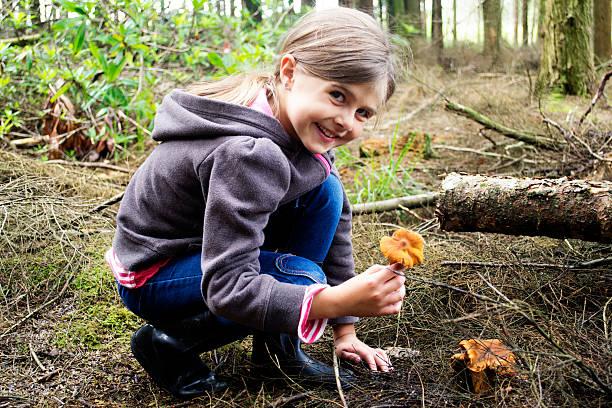 mushroom picking - höst plocka svamp bildbanksfoton och bilder