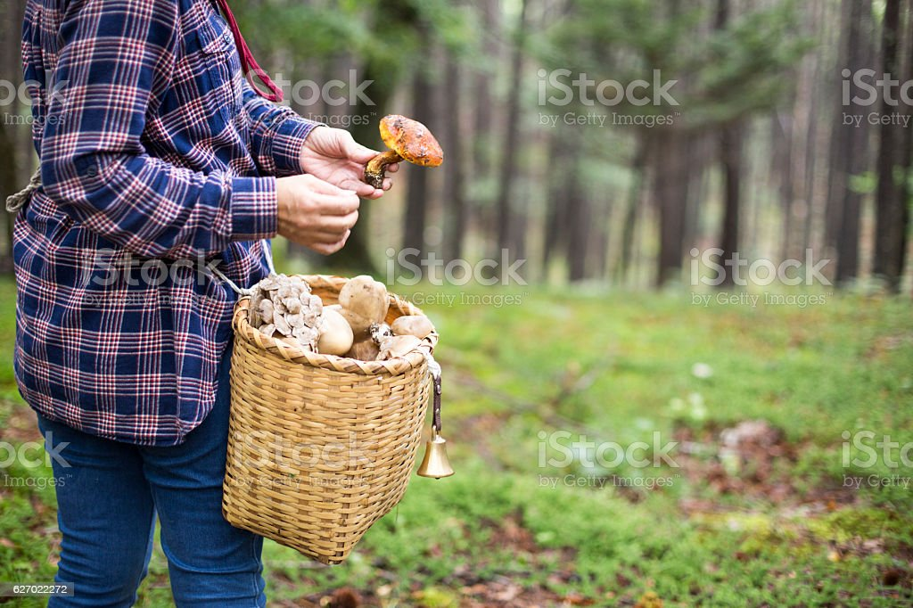 Mushroom picking stock photo