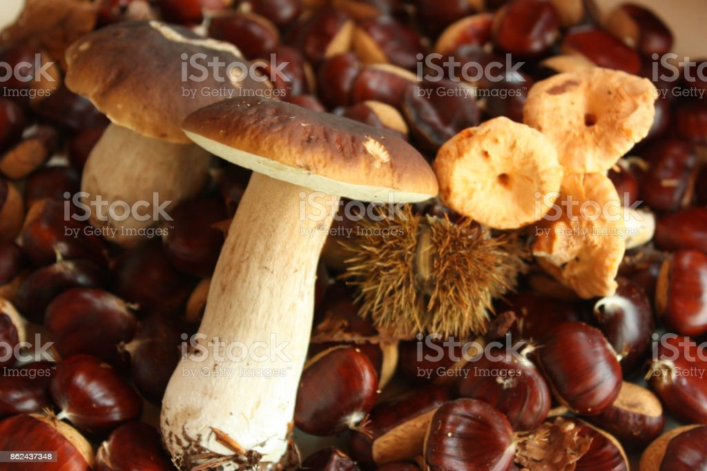 Mushroom picking stock photo