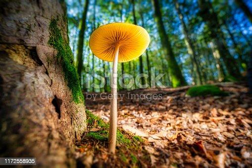 istock Mushroom 1172558935
