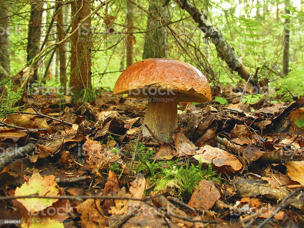 mushroom royaltyfri bildbanksbilder