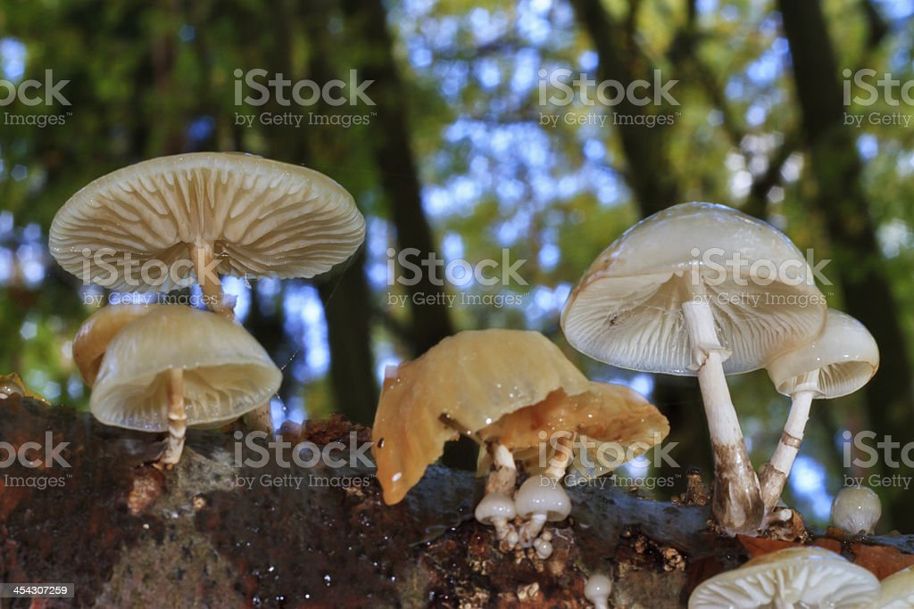 Mushroom Season stock photo