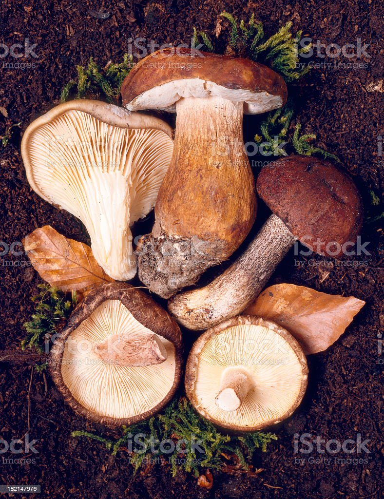 Mushroom selection stock photo