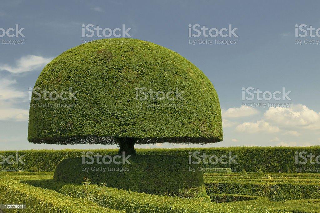 mushroom shaped tree - Royalty-free Art Stock Photo