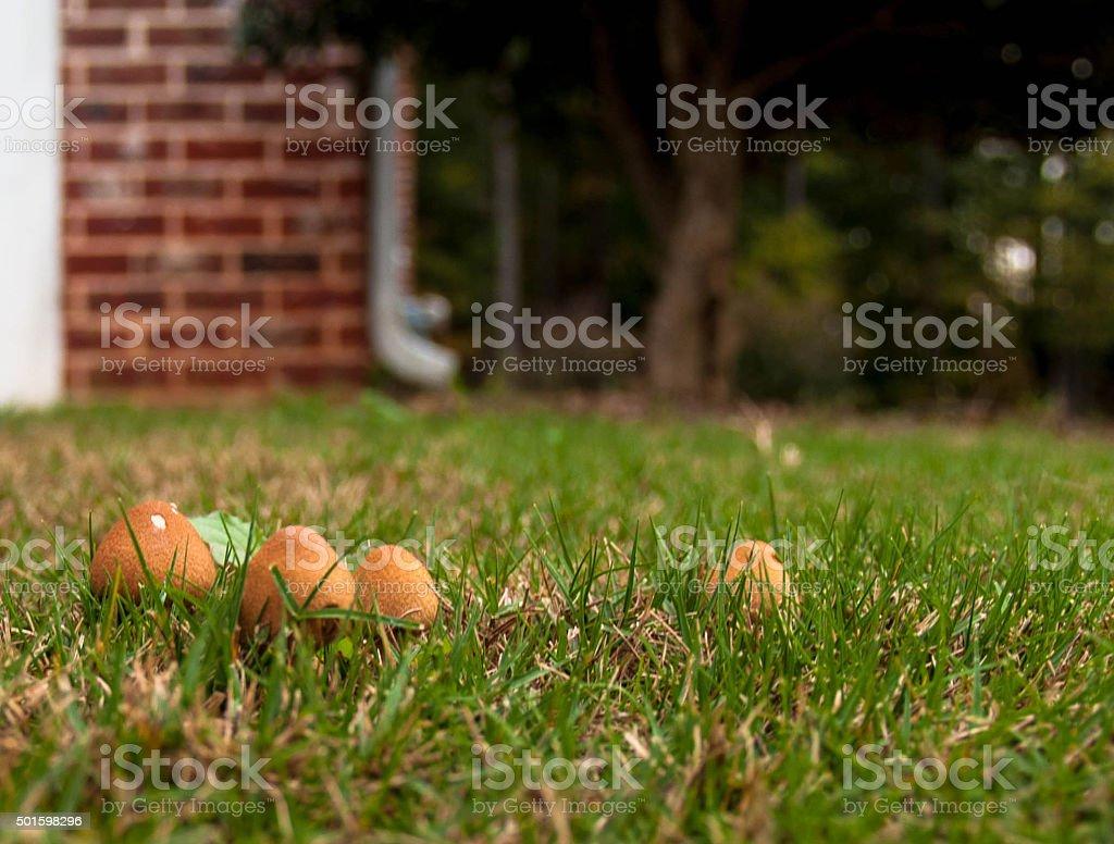 Mushroom Village stock photo