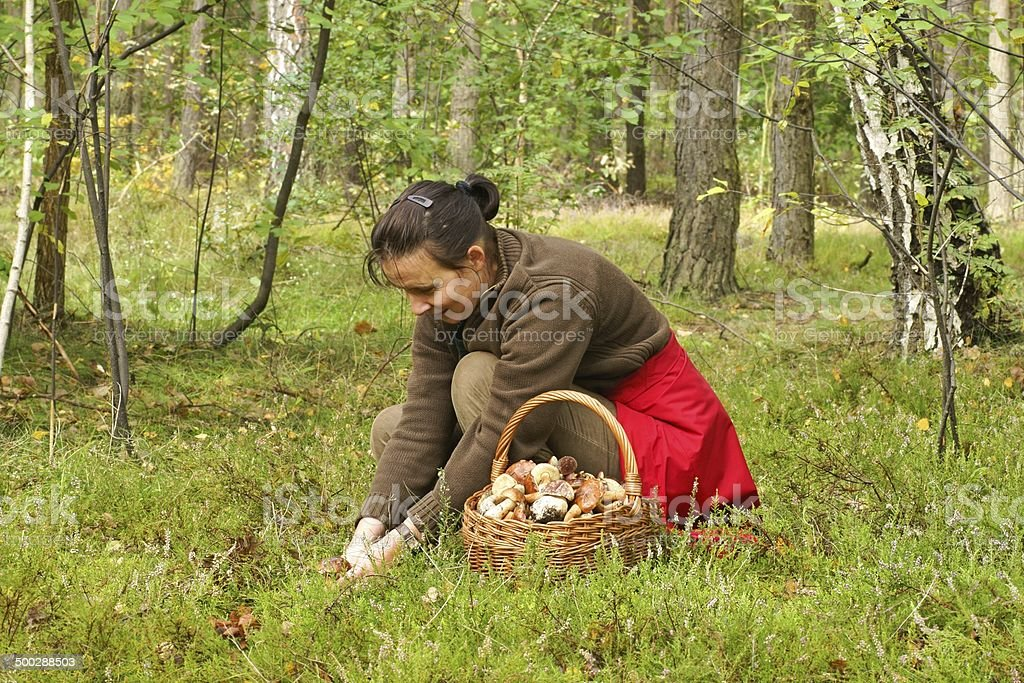 Mushrooming, woman picking mushrooms in the forest stock photo