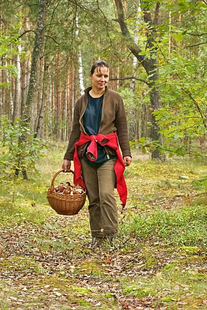 mushrooming, woman picking mushrooms in the forest - höst plocka svamp bildbanksfoton och bilder