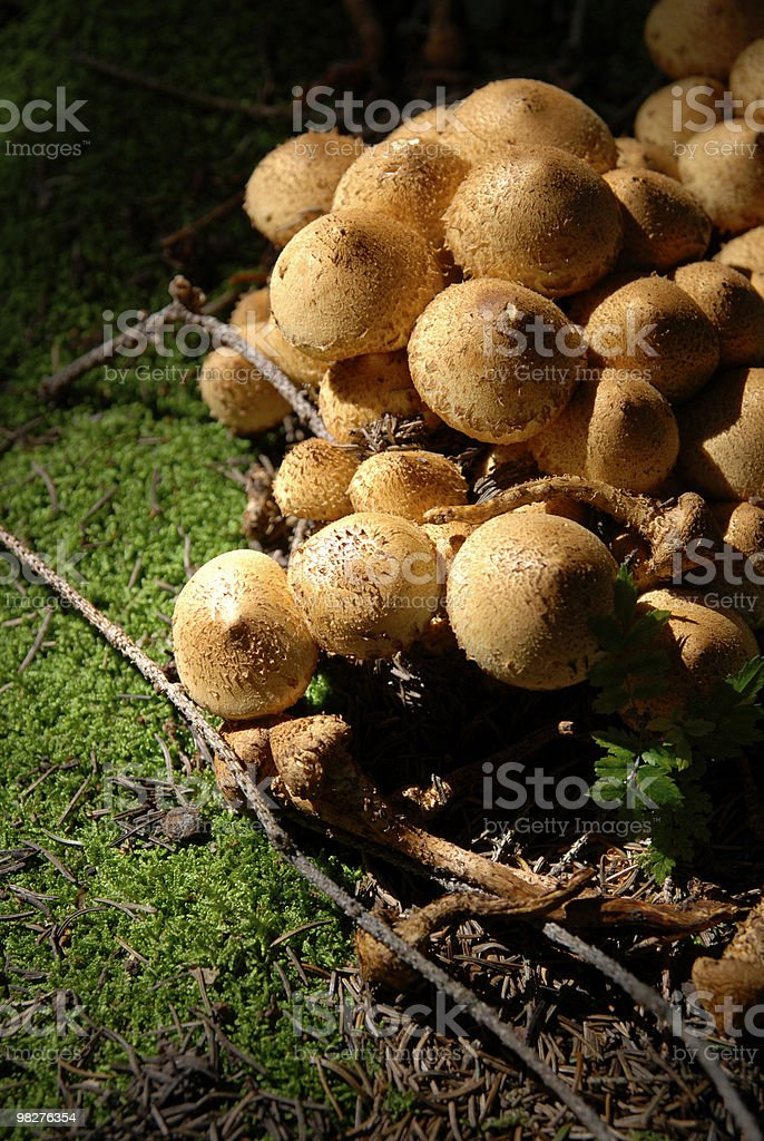 mushrooms and moss in the forest royalty-free stock photo