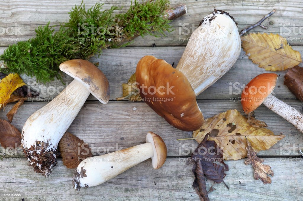 mushrooms arranged on a plank royalty-free stock photo