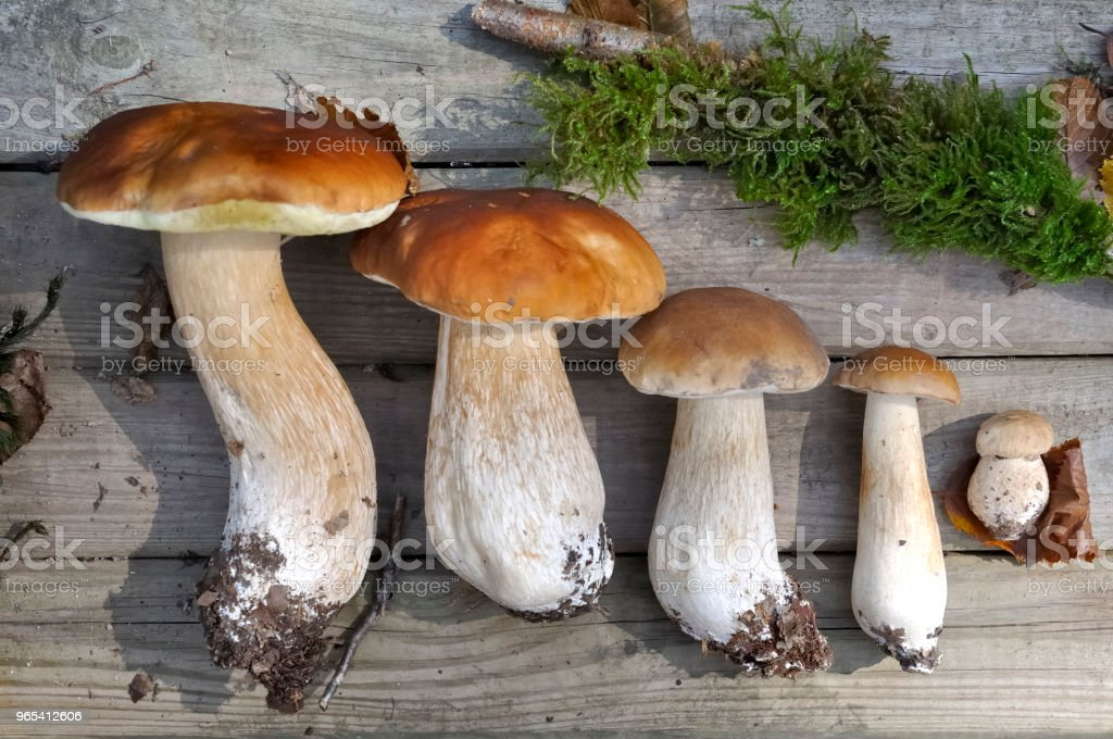 mushrooms arranged on wooden plank royalty-free stock photo