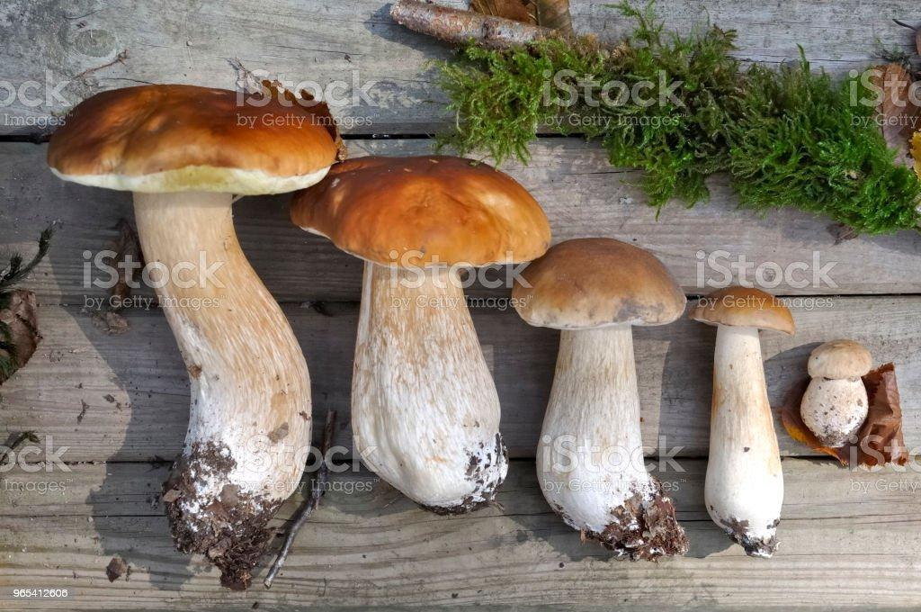 champignons, disposés sur une planche en bois - Photo de Aliment libre de droits