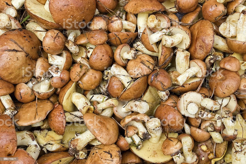 Mushrooms background royalty-free stock photo