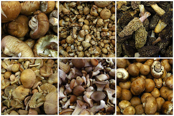 Mushrooms collage from market, food ingredients stock photo