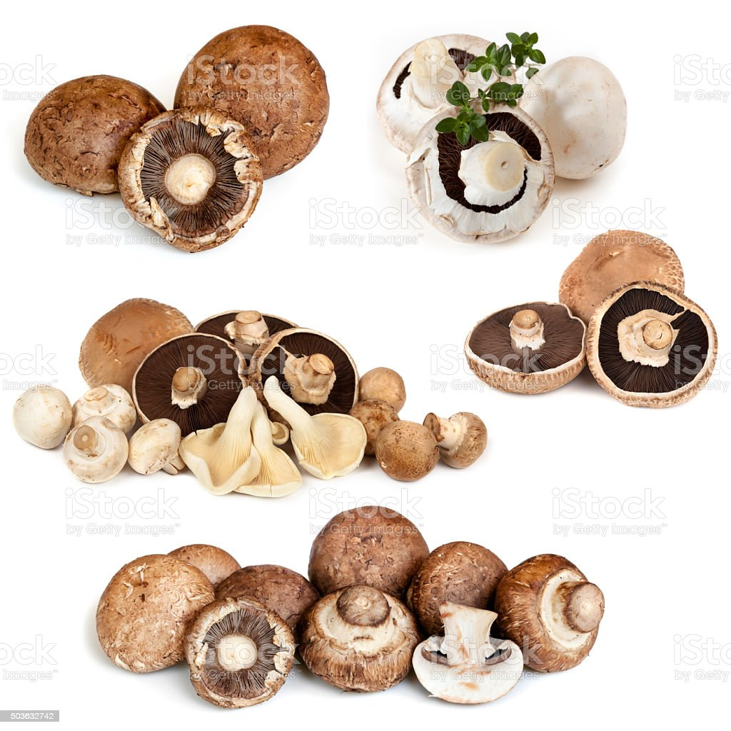 Mushrooms Collection isolated on White stock photo
