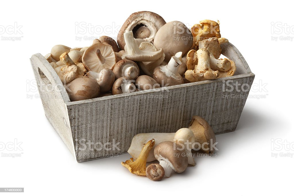 Mushrooms: Collection stock photo