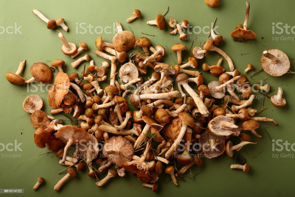 mushrooms honey agaric on green, food above stock photo