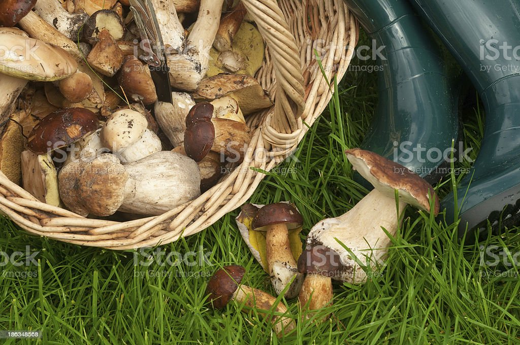 mushrooms in a basket royalty-free stock photo