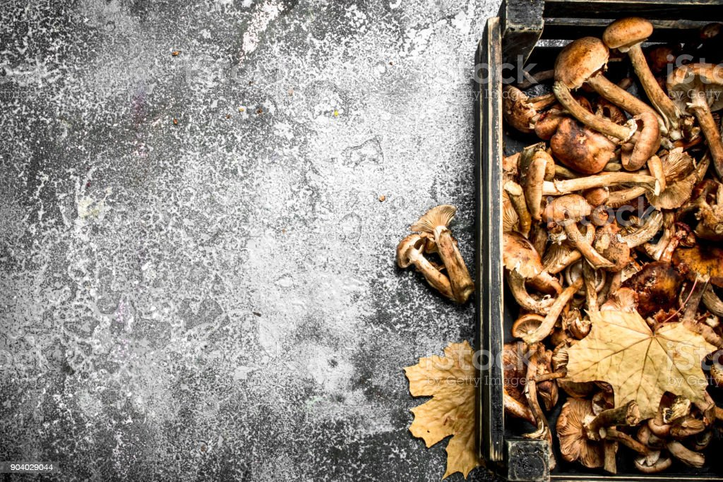 Mushrooms in an old box. stock photo