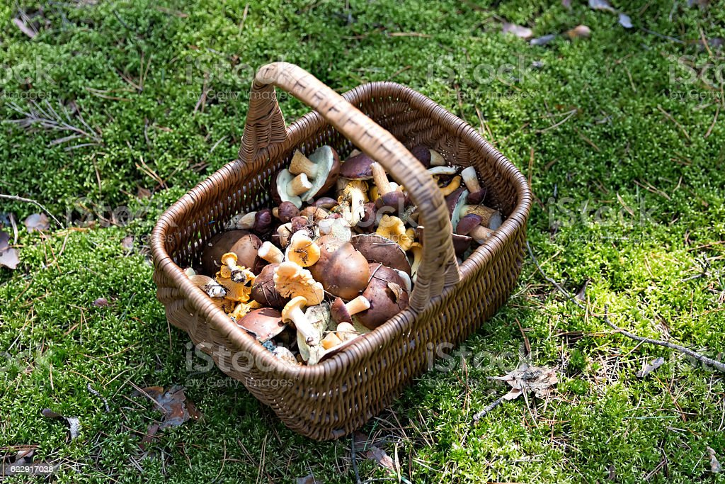 mushrooms in the basket stock photo