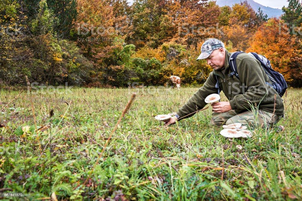 Mushrooms in the field stock photo