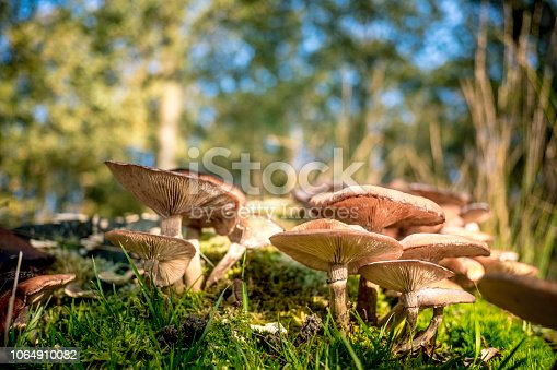 Mushrooms in the forest during a beautiful fall day in the national park Dwingelderveld in Drenthe, the Netherlands.