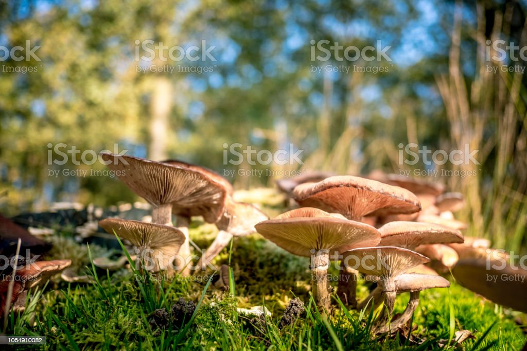 Mushrooms in the forest during a beautiful fall day - foto stock