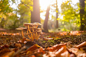 istock Mushrooms in the forest during a beautiful fall day 866524002