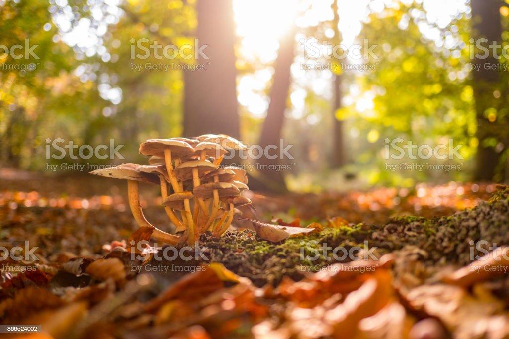 Paddestoelen in het bos tijdens een prachtige herfstdag foto