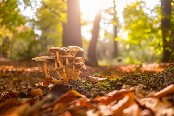Mushrooms in the forest during a beautiful fall day stock photo